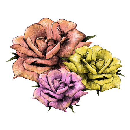 bouquet of flower buds of roses of pink and yellow flowers on white background, sketch vector graphics color illustration