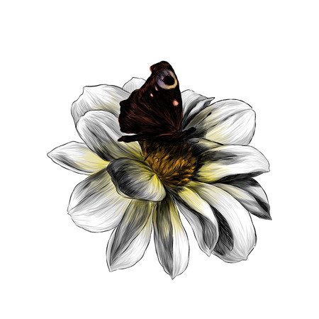 flower Bud Dahlia with butterfly in the center on white background, sketch vector graphic color illustration Vektorgrafik
