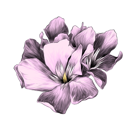 a bouquet of three flower buds called oleander, sketch vector graphics color illustration