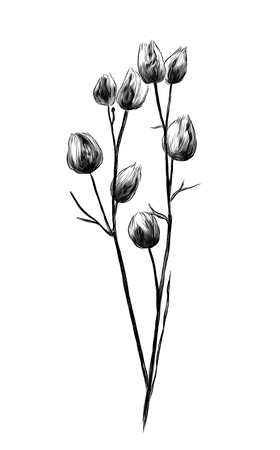 dry grass branch with seed bags, sketch vector graphics monochrome illustration Banco de Imagens