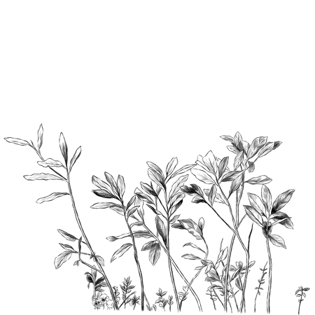 sprouts of grass and branches with leaves, sketch vector graphics monochrome illustration