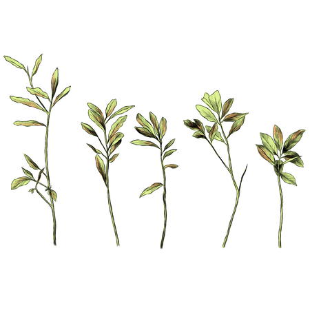 set of grass branches with leaves, sketch vector graphic color illustration