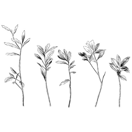 set of grass branches with leaves, sketch vector graphics monochrome illustration