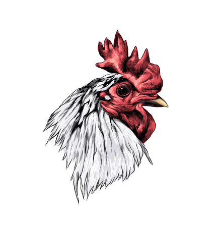 cock head in profile, sketch vector graphic color illustration Stockfoto