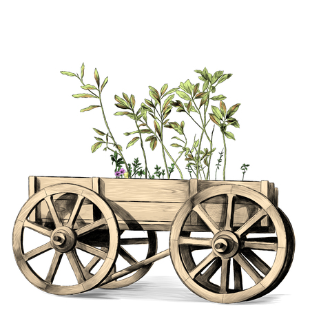wooden cart with big wheels with plants inside on white background, sketch vector graphics color illustration Reklamní fotografie