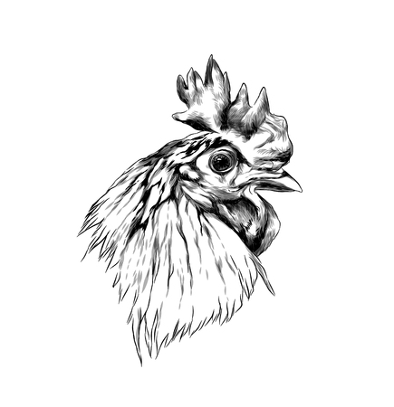 cock head in profile, sketch vector graphics monochrome illustration Stock Photo