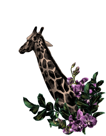 giraffe head sideways with a wreath in the form of a frame from the bottom of the tree branches with leaves and branches of Orchid flowers, sketch vector graphics color illustration Stock Photo