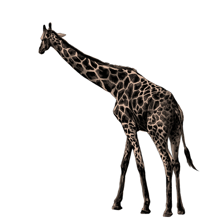 giraffe in full growth is sideways, sketch vector graphics color illustration