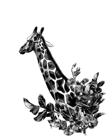 giraffe head sideways with a wreath in the form of a frame from the bottom of the tree branches with leaves and branches of Orchid flowers, sketch vector graphics monochrome illustration