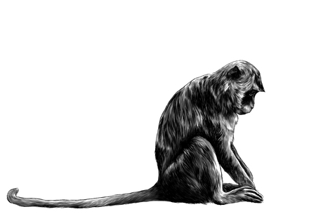 Monkey sitting sideways with his head down, sketch vector graphics monochrome drawing on white background Foto de archivo