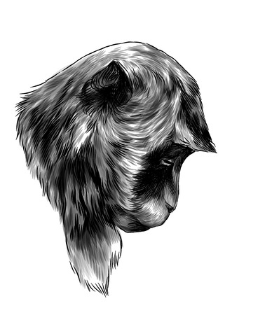Monkey head lowered down with sad expression, sketch vector graphic monochrome illustration on white background Фото со стока