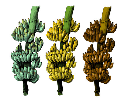 set of three large bundles of bananas on a thick branch green, ripe and missing, sketch vector graphics color illustration Banco de Imagens