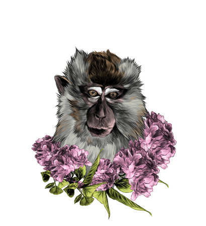 head of a macaque in full-face with a wreath on the neck of Sakura flowers with leaves, sketch vector graphics color illustration