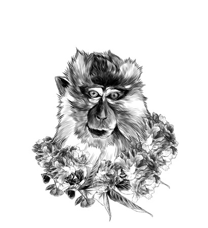 head of a macaque in full-face with a wreath on the neck of Sakura flowers with leaves, sketch vector graphics monochrome illustration Stock Photo