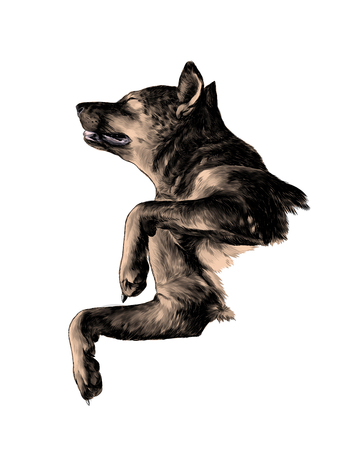 The dog raised face with eyes closed and legs bent in a pose of relaxation, sketch vector graphics color illustration on white background