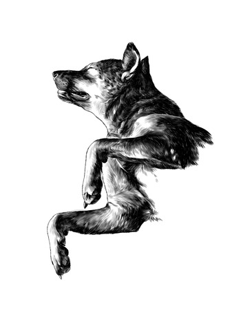 The dog raised face with eyes closed and legs bent in a pose of relaxation, sketch vector graphics monochrome illustration on white background