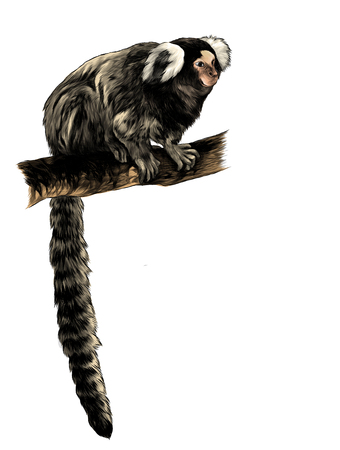 hroncova monkey in full growth with a long tail sitting on a tree branch, sketch vector graphics color illustration on white background Stock Photo