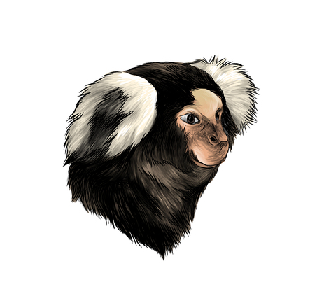 monkey head in profile, sketch vector graphics color illustration on white background 写真素材