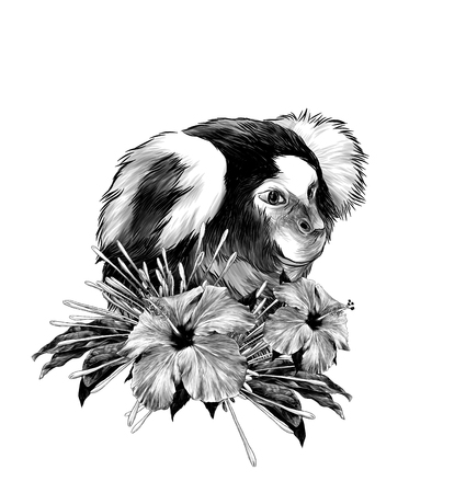 the monkey head in profile with a wreath on the neck made of clerodendrum flowers and hibiscus with leaves, sketch vector graphics monochrome illustration on white background Stock Photo