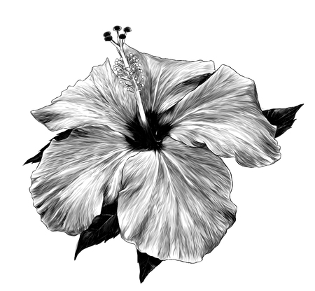 hibiscus flower close - up of a loose Bud with leaves, sketch vector graphics monochrome illustration on white background