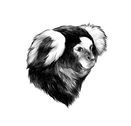 monkey head in profile, sketch vector graphics monochrome illustration on white background Reklamní fotografie