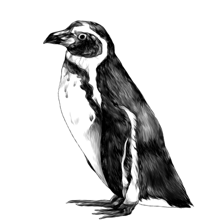 penguin stands in full height sideways in profile, sketch vector graphics monochrome illustration on white background