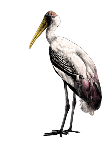 bird stork stands in full height sideways, sketch vector graphic color illustration on white background