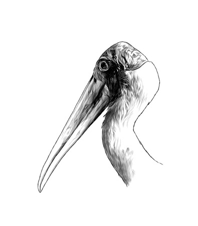 the head of the bird stork the sides in profile, sketch vector graphics monochrome illustration on white background