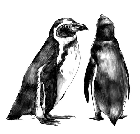 two penguins stand in full height one sideways second back, sketch vector graphics monochrome illustration on white background