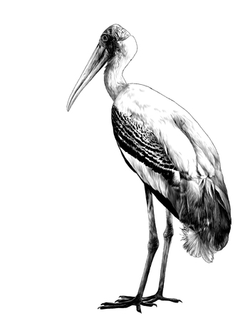 bird stork stands in full height sideways, sketch vector graphics monochrome illustration on white background