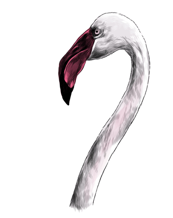 bird head Flamingo with long neck sideways in profile, sketch vector graphic color illustration on white background Imagens