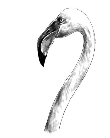 bird head Flamingo with long neck sideways in profile, sketch vector graphics monochrome illustration on white background