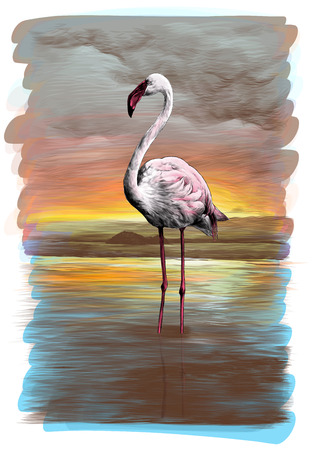 flamingos standing in the pond on the order, sketch vector graphics color illustration on white background Stock Photo