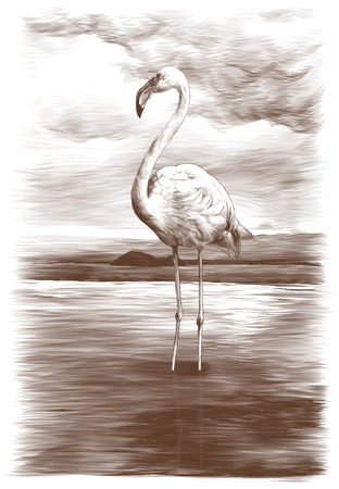 Flamingo stands in a pond on a sky background, sketch vector graphic monochrome illustration on white background