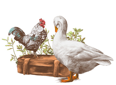 cock stands on an old retro suitcase and goose stands next in the background growing grass, sketch vector graphics color illustration on white background