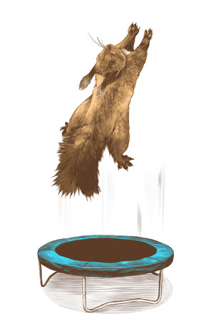 squirrel jumps on a trampoline and flies up, sketch vector graphics color illustration on white background Ilustracja