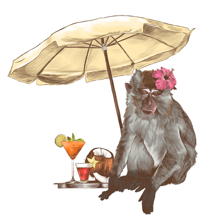 monkey sitting on the beach under a beach umbrella with a tropical flower on his head and standing next to a tray of beautiful cocktails and coconut, sketch vector graphics color illustration Illustration