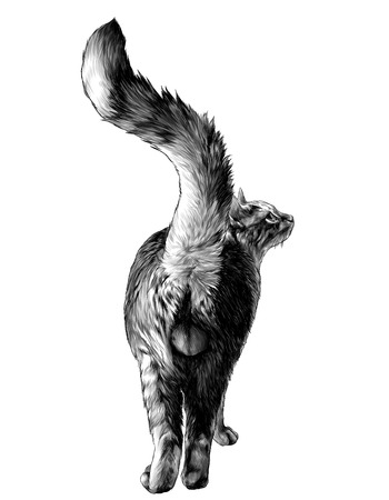 cat stands in full height rear view on ass with raised tail and visible genitals of eggs, sketch vector graphics monochrome illustration on white background