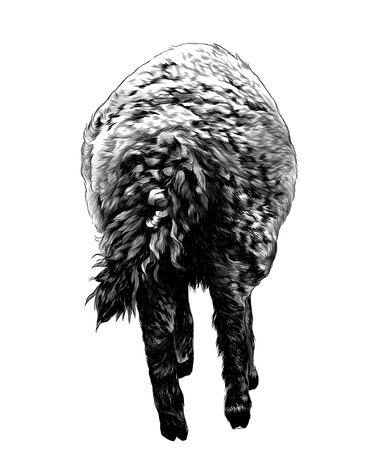 lamb is a rear view on the ass with a curly tail, sketch vector graphics monochrome illustration on a white background