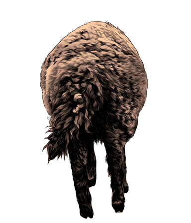 lamb is a rear view of the ass with a curly tail, sketch vector graphics color illustration on a white background