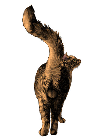 the cat is in a full-length rear view on the ass with a raised tail and visible genitals balls, sketch vector graphics color illustration on white background Stock Photo