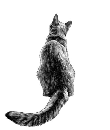 cat sitting in full height rear view on back with long elongated tail, sketch vector graphics monochrome illustration on white background