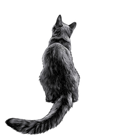 cat sitting in full height rear view on back with long elongated tail, sketch vector graphic color illustration on white background