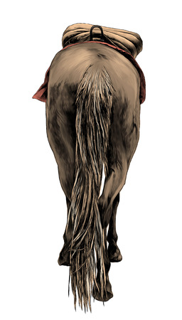 horse standing with saddle back view on ass and little head and ears sticking out and lifted one leg, sketch vector graphics color illustration on white background
