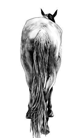 horse stands back view on ass and little head and ears sticking out and lifted one leg, sketch vector graphics monochrome illustration on white background