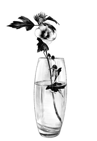 flower in glass vase, sketch vector graphics monochrome illustration on white background
