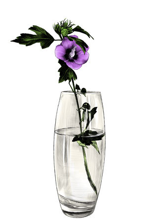 flower in glass vase, sketch vector graphic color illustration on white background Ilustração