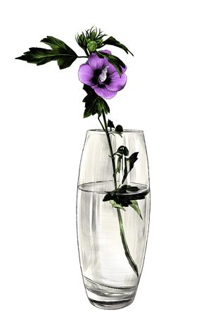 flower in glass vase, sketch vector graphic color illustration on white background Illustration