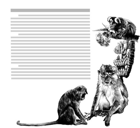 composition at the corner of the sheet with text depicting monkeys with flowers and bananas, sketch vector graphics monochrome illustration on white background