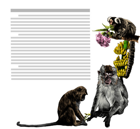 composition at the corner of the sheet with text depicting monkeys with flowers and bananas, sketch vector graphics color illustration on white background
